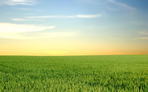 field, greens, horizon