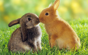 Rabbits, grass, kiss