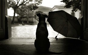 perro, paraguas, patio, Estilo