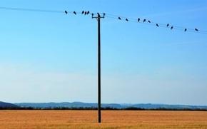 column, Birds, sky