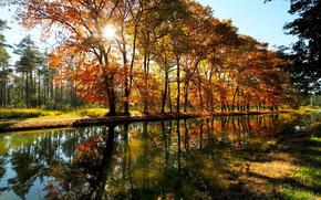 park, drzew, cie