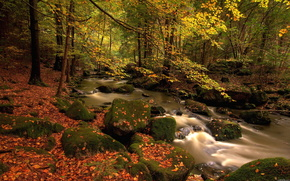 forest, creek, nature