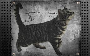 chat, mtal, avenir, fond d'cran libre, humeur, dpression