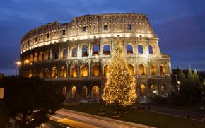 Rome, Colosseum, Tree