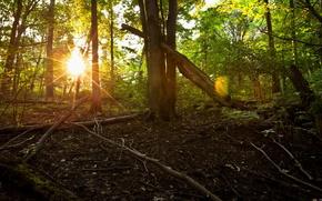 лес,  лето,  природа,  утро