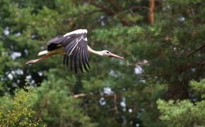 bird, stork, nature