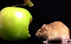 mouse, mela, verde