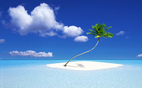 palm, Island, tropics