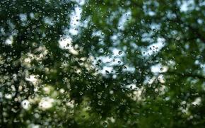 pioggia, gocce, vetro, alberi