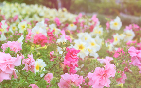 fiori, tenerezza, aiuola
