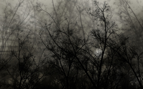 branches, shadow, black