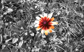 Fleurs, Nature, herbe, papier peint
