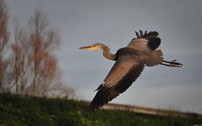 bird, stork, sky, flight