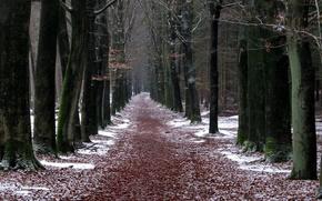 park, road, Trees, winter