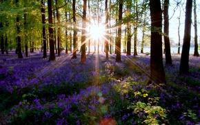 foresta, alberi, fiori, sole