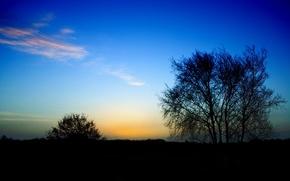 дерево, куст, конец дня, перистые облака