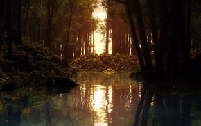 fiume, alberi, sole, tramonto, acqua