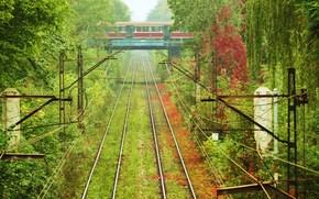 train, car, grass, Trees, Rails