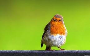 bird, nature, color