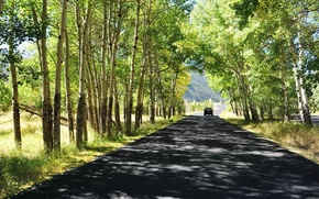 strada, estate, alberi, natura