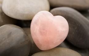 pierre, cur, rose