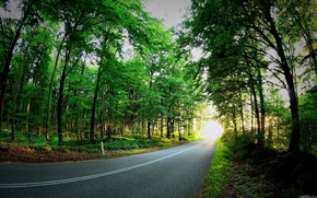road, forest, summer, nature