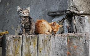 猫, 自然, 美しさ