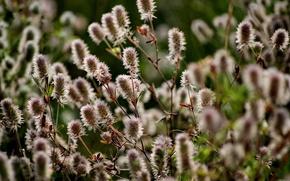 natura, estate, flora, bellezza