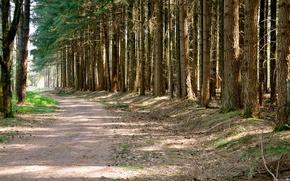 strada, foresta, alberi, natura