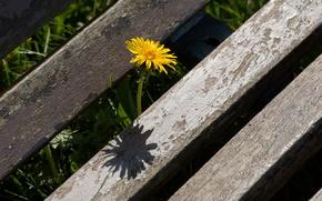 цветок,  одуванчик,  лето,  макро