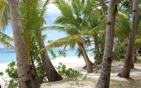 море, небо, облака, синее, голубое, песок, берег, пальмы