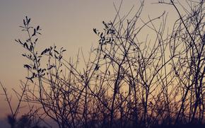 支, 叶子, 天空