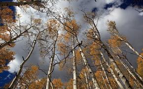 秋天, 桦木, 天空, 性质