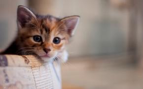 cat, kitten, view