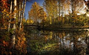 parco, fiume, ponte, natura, bellezza