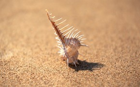shell, sand, minimalism, focus, Needles