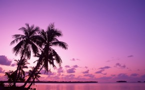 Palms, de vacaciones, salida del sol