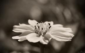 макро,  цветок,  монохром