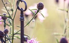 fiori, erba, chiave