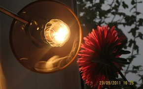 flower, aster, red, lamp, evening, window