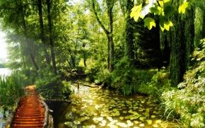 лес, мостик, солнце, осень