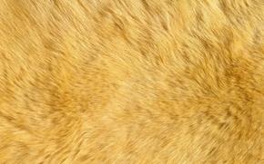 skin of a polar bear, fur, skin