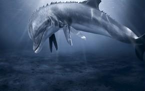 delfino, mostro, forbici