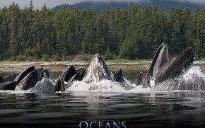 Океаны, Océans, фильм, кино