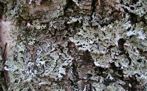cortex, moss, lichen