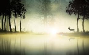 болото,  туман,  деревья