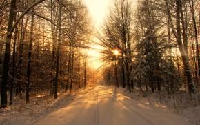 зима, лес, деревья, свет