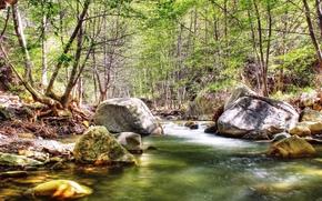 paysage, Nature, voir, image, grassement, papier peint
