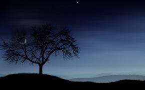 noc, drzewo, ksiyc