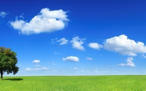 drzewo, pole, chmury, horyzont
